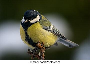 乳房, 鳥