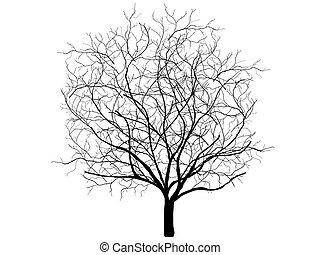 乾きなさい, ベクトル, 古い木, オーク, 王冠, 隔離された, 死んだ, silhouette., なしで, leafs, 白