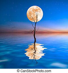 乾きなさい, 古い木, 水
