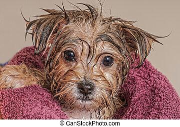 乾きなさい, 彼の, 得ること, 後で, 浴室, 子犬