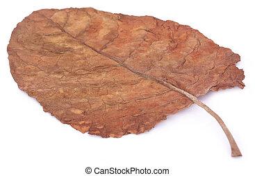 乾きなさい, 葉, タバコ