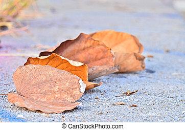 乾きなさい, 葉, 地面