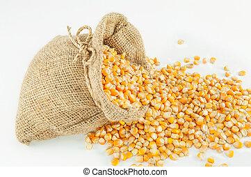乾燥されたトウモロコシ, 種, 中に, 小さい, バーラップ, 嚢
