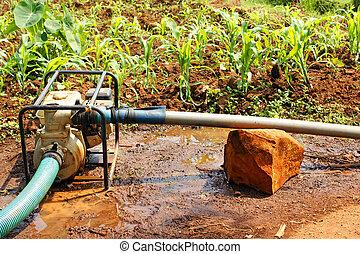 乾燥した季節, 水, フィールド, ポンプ, の間