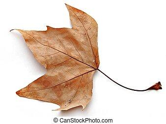 乾燥, 葉子