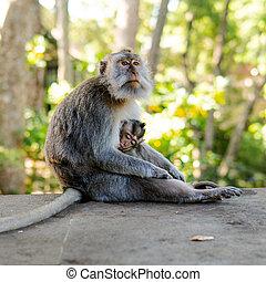 予備, offspring., 霊長類, 連絡, 心配, 再生, 猿, 行動, 自然, 観光客