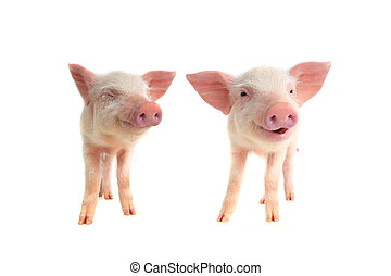 二, 微笑, 豬