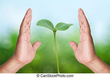 二, 手 藏品, 年輕 植物, 上, 自然, 背景