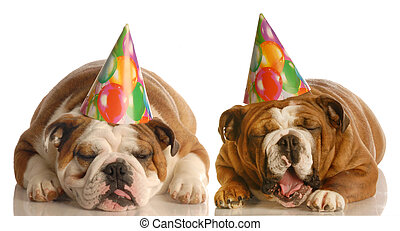 二, 被蕭條, 生日, 狗