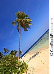 互い違いになること, 浜, ヤシの木