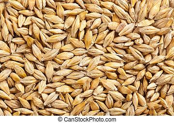 五穀, 大麥