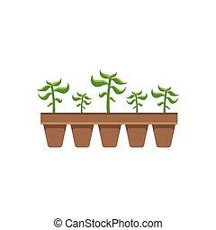 五, 植物, 在, 罐