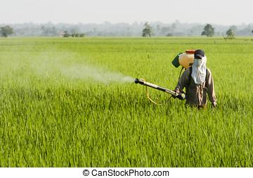 亚洲, 水稻领域