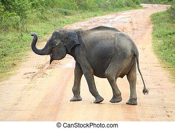 交差, 若い, 道, 象