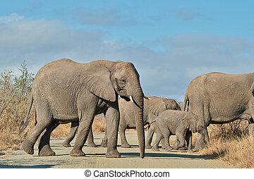 交差, 象, 道, 群れ