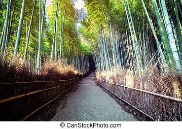 京都, 場所, 森林, arashiyama, 竹, 有名, 日本