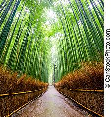 京都, 森林, arashiyama, 道, 日本, 竹
