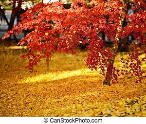 京都, 群葉, 秋