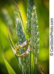 人物面部影像逼真, 戒指, 金, 婚禮