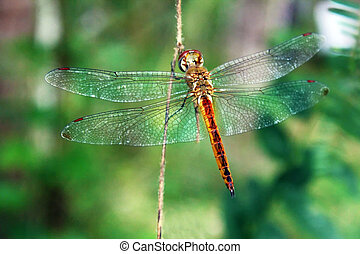 人物面部影像逼真, ......的, 蜻蜓