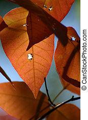 人物面部影像逼真, ......的, a, 葉子, 在, 秋天