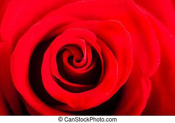 人物面部影像逼真, 紅色的玫瑰, 花, 如, 愛, 自然, 背景