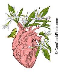 人的 心臟, 由于, 花