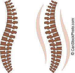 人的 脊椎, 黑色半面畫像