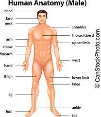 人間の体部分