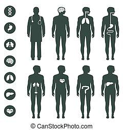 人間の組織体, 解剖学