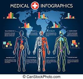 人間の組織体, 解剖学, infographic