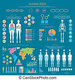 人間の組織体, 詳しい, infographic, ∥で∥, 統計量