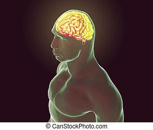 人間の頭脳, イラスト