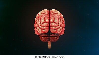 人間の頭脳, ビューを支持しなさい