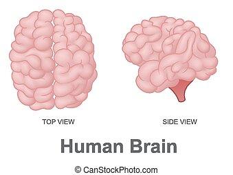 人間の頭脳
