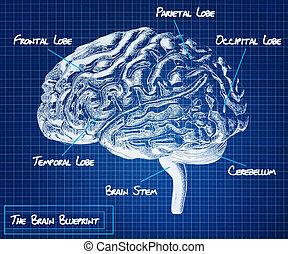 人間の頭脳, 青写真