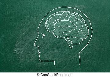 人間の頭, brain.