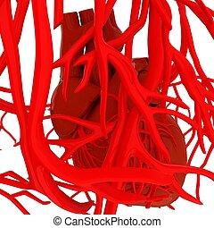 人間の 中心, そして, veins., 3d, illustration.