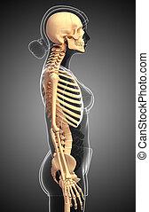 人間の 骨組, サイド光景