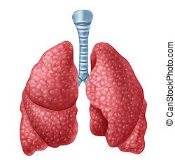 人間, 肺