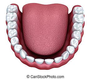 人類, 假牙, 3d, 圖像, 被隔离, 在懷特上