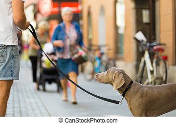 人, 犬, leash.