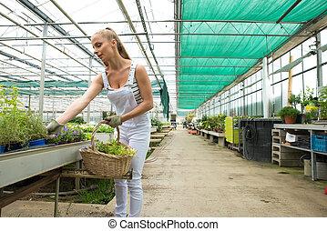 仕事, 庭師, 託児所, 若い, 温室, 大きい
