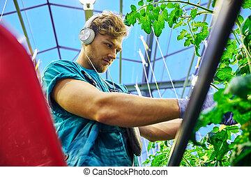 仕事, 水力のプラットホーム, リフト, 温室, 農夫, はさみ, 味方