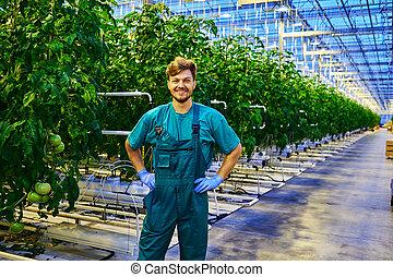 仕事, 温室, 味方, 農夫