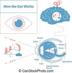 仕事, 目, ポスター, イラスト, 医学, diagram., -, 定型, 優雅である, ラベルをはられた,...