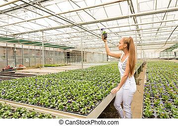 仕事, 若い, 大きい, 託児所, 温室, 庭師
