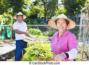 仕事, 農場, 農夫, 野菜, シニア, 幸せ