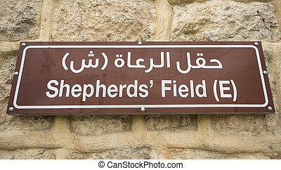 以色列,  sahour, 領域,  -, 簽署,  beit,  Bethlehem, 教堂,  shepherds'