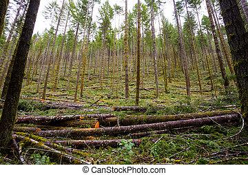 伐採産業, 薄くなる, 木, 材木